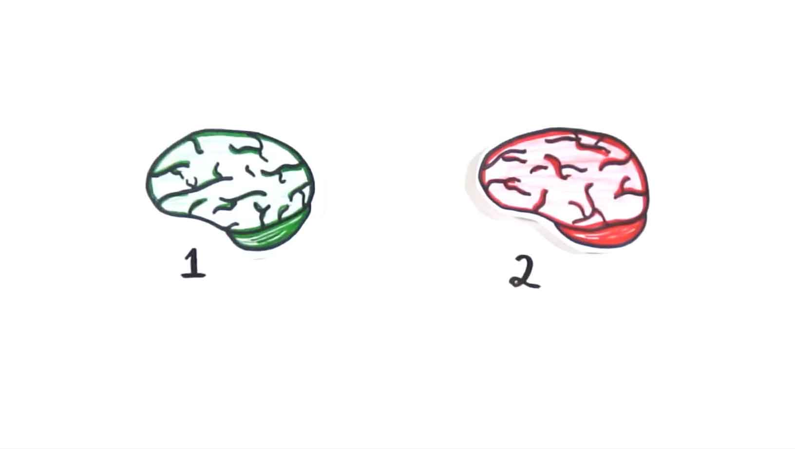 VIDEO: How Your Brain Really Works